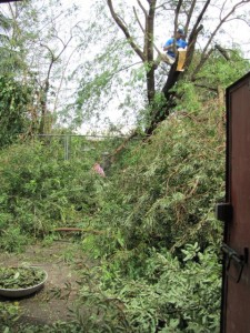 After first storm Dwayne cut branches off the falling tamarind tree in front of our house